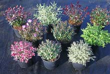 Buy hebes online nationwide delivery